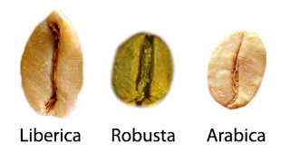 coffee-beans-types