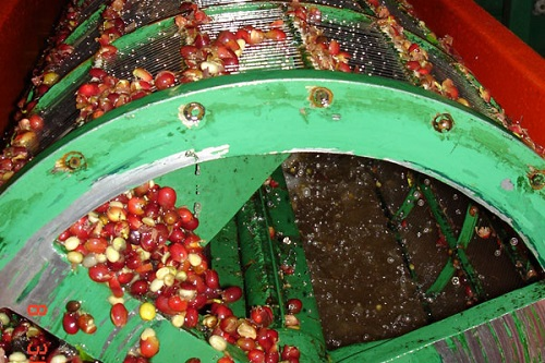 coffee-milling-in-extraction-drum